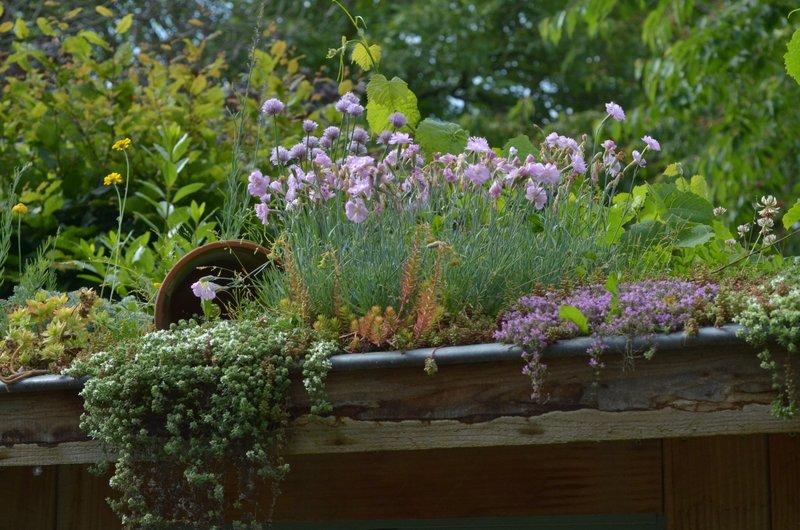 Chambres d 39 hotes de charme en alsace ambiance jardin for Ambiance jardin erpeldange